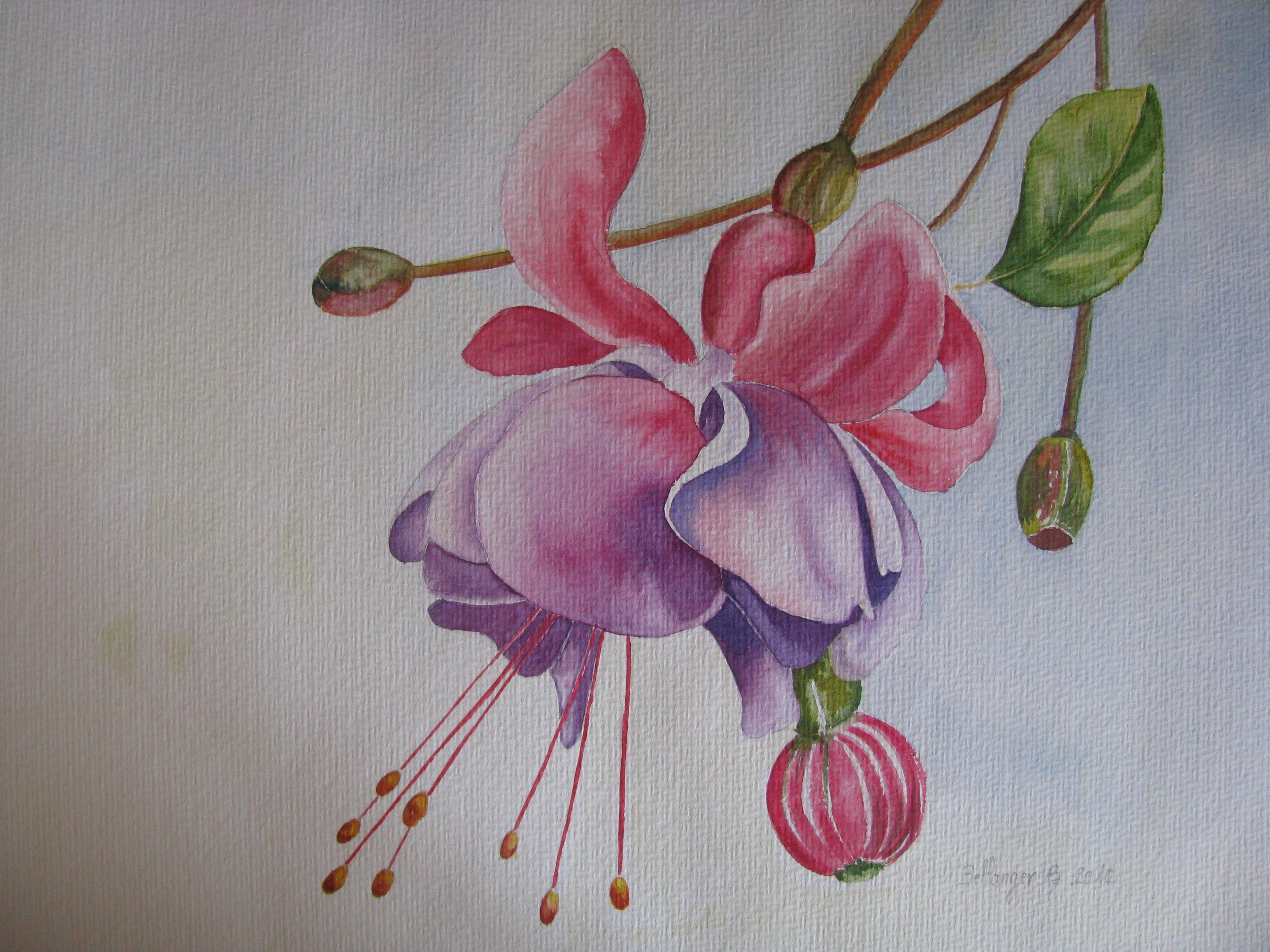Aquarelles fleurs for Aquarelle fleurs